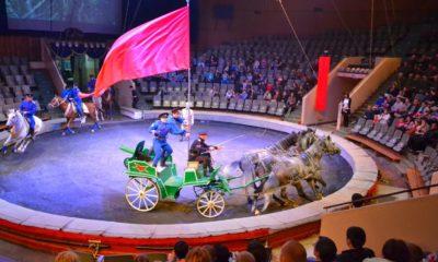 Цирк в Волгограде - как и чем живет арена? Любимое горожанами место отдыха!