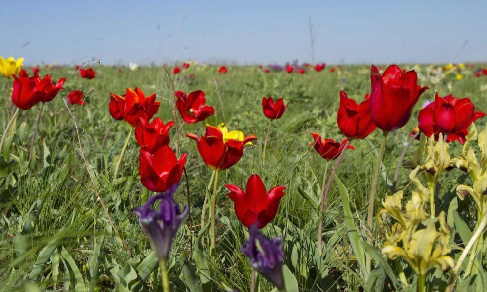 Природа Волгограда и Волгоградской области. Разнообразие растительного мира. Климат и красная книга.